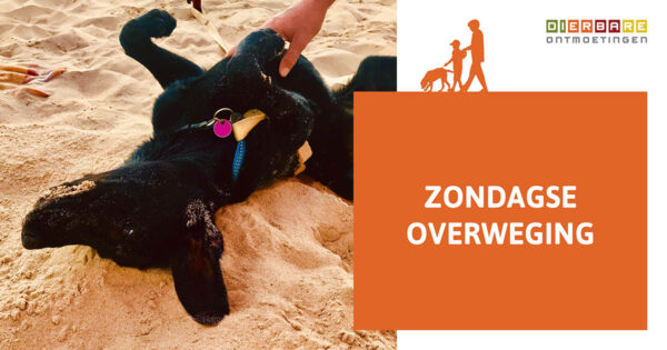 Dierbare Blog Zondagse Overweging