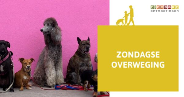 DIERBARE_zondagse-overweging_blog