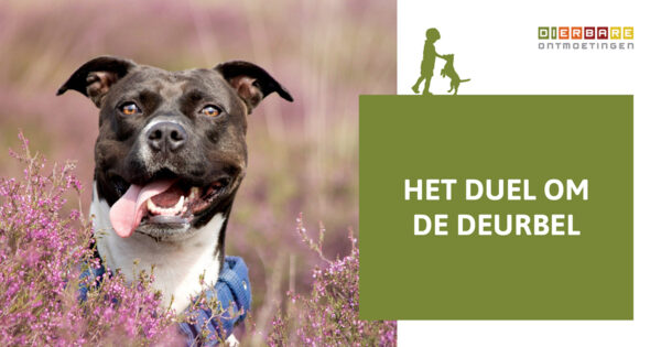 DIERBARE-ONTMOETINGEN-MAIN-BLOG-hondeneigenaar-Het-duel-om-de-deurbel-blog