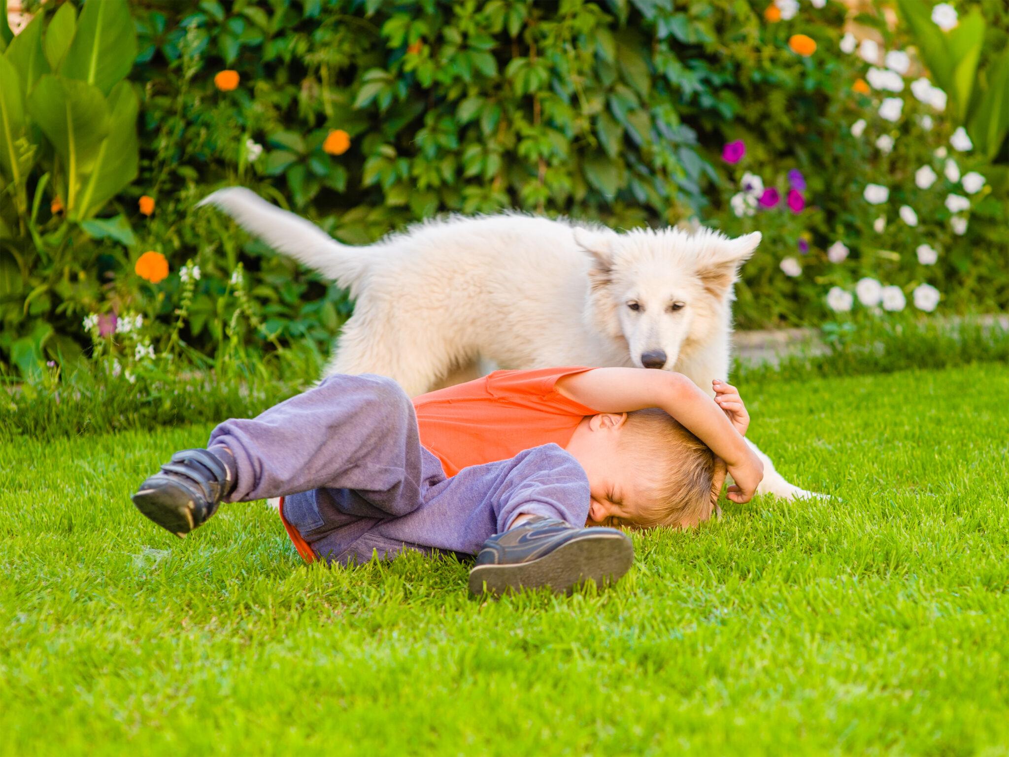 Hondenbrandjes Dierbare Ontmoetingen